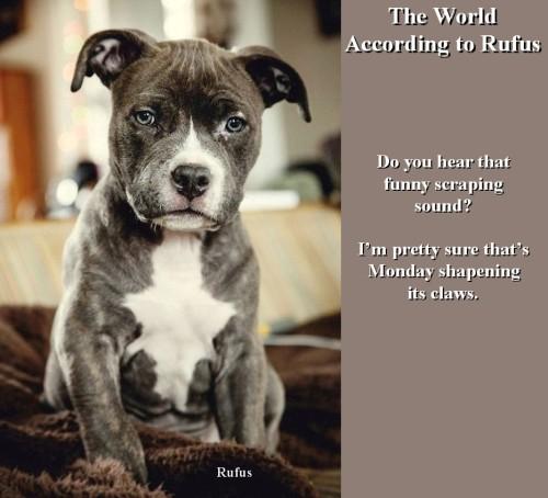 Rufus 11